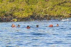 Groep Mensen die, de Galapagos, Ecuador snorkelen Stock Foto's