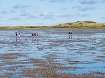Groep mensen die mudflat op Waddensea at low tide van Friesland aan het eiland Ameland, Nederland wandelen van het Westenfrisian royalty-vrije stock foto's