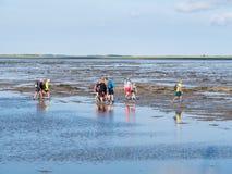 Groep mensen die mudflat op Waddensea at low tide van Friesland aan het eiland Ameland, Nederland wandelen van het Westenfrisian stock afbeelding