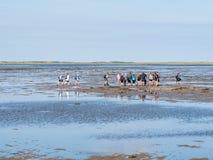 Groep mensen die mudflat op Waddensea at low tide van Friesland aan het eiland Ameland, Nederland wandelen van het Westenfrisian stock foto's
