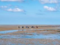 Groep mensen die mudflat op Waddensea at low tide van Friesland aan het eiland Ameland, Nederland wandelen van het Westenfrisian royalty-vrije stock fotografie