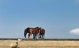 Groep mooie paarden op een bergweg Royalty-vrije Stock Foto's
