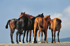 Groep mooie paarden op een bergweg Stock Foto's