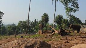 Groep olifanten stock videobeelden