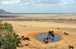 Groep olifanten bij een waterhole Stock Afbeelding