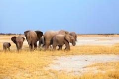 Groep olifanten grote en kleine welpen op geel gras en blauwe hemelachtergrond in het Nationale Park van Etosha, Namibië, Zuid-Af royalty-vrije stock foto's