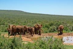 Groep olifants dichtbijgelegen water geven-plaats in savanne stock foto