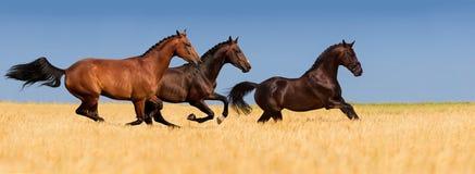 Groep paard Stock Afbeeldingen