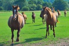 Groep paarden Stock Afbeeldingen