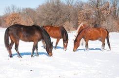 Groep paarden Royalty-vrije Stock Afbeelding