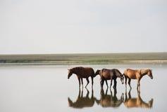 Groep paarden Royalty-vrije Stock Afbeeldingen