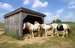Groep paarden Stock Fotografie