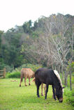 Groep paarden die gras in groen landbouwbedrijf eten Royalty-vrije Stock Afbeelding