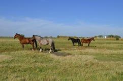 Groep paarden in een weiland royalty-vrije stock fotografie
