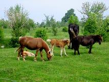Groep paarden in een weiland Stock Foto