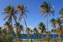 Groep palmen Stock Foto's