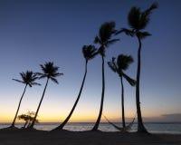 Groep palmen en hangmat op strand in de Caraïben bij zonsopgang royalty-vrije stock afbeeldingen
