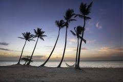 Groep palmen en hangmat op strand in de Caraïben royalty-vrije stock afbeeldingen