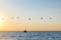 Groep pelikanen die op het strand bij zonsondergang vliegen - Puerto Vallarta, Jalisco, Mexico Stock Afbeelding