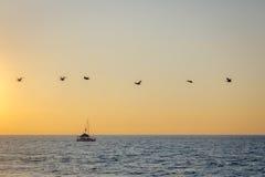 Groep pelikanen die op het strand bij zonsondergang vliegen - Puerto Vallarta, Jalisco, Mexico Royalty-vrije Stock Foto's