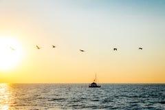 Groep pelikanen die op het strand bij zonsondergang vliegen - Puerto Vallarta, Jalisco, Mexico Royalty-vrije Stock Afbeelding