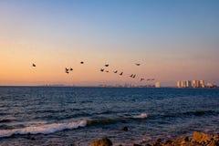 Groep pelikanen die op het strand bij zonsondergang vliegen - Puerto Vallarta, Jalisco, Mexico Stock Foto's