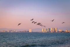 Groep pelikanen die op het strand bij zonsondergang vliegen - Puerto Vallarta, Jalisco, Mexico Royalty-vrije Stock Foto