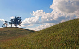 Groep pijnbomen op de heuvel Royalty-vrije Stock Foto