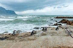 Groep pinguïngang op het strand Stock Foto's