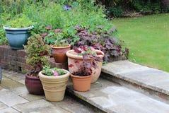 Groep planters op tuinstap met gazon op achtergrond stock afbeeldingen