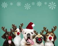 Groep puppy die Kerstmiskostuums dragen stock afbeelding