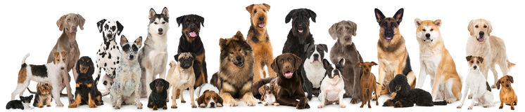 Groep rassenhonden stock foto's