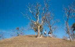 Groep Reizigers die onderaan Heuvel op mooie de winterdagen lopen Stock Fotografie