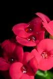 Groep rode bloemen Royalty-vrije Stock Afbeelding