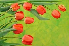 Groep rode tulpen Stock Afbeelding