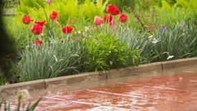 Groep rode tulpen in het park stock foto