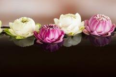Groep roze en witte lotusbloem Stock Afbeeldingen