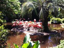 Groep roze flamingo's op een klein eiland met rond water allen stock afbeeldingen