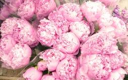 Groep Roze Pioenboeketten royalty-vrije stock afbeelding