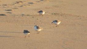 Groep strandlopers op het strand stock afbeeldingen