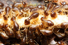 Groep termiet stock fotografie