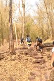 Groep Toeristen die Bergopwaartse mountine van Phu lopen Kradueng Reis Royalty-vrije Stock Foto's