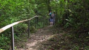 Groep toeristengangen op bergweg in groen tropisch bos stock videobeelden