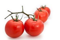 Groep tomaten Royalty-vrije Stock Afbeeldingen