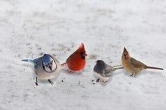 Groep Tuin - verscheidenheidsvogels op sneeuw Stock Foto's