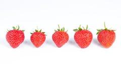 Groep van vijf die aardbeien op wit wordt geïsoleerd Stock Foto