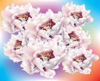 Groep verse bloesem roze pioenen vector illustratie