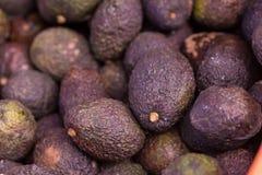 Groep verse rijpe en onrijpe avocado's in de landbouwer Stock Foto's