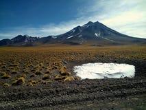 Groep vicuñas op het landschap, met vulcan op rug stock afbeelding