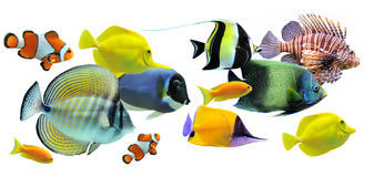 Groep vissen Stock Foto's